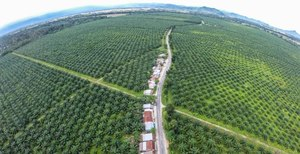 Palm oil and public awareness
