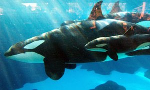SeaWorld decline is slow but persistent