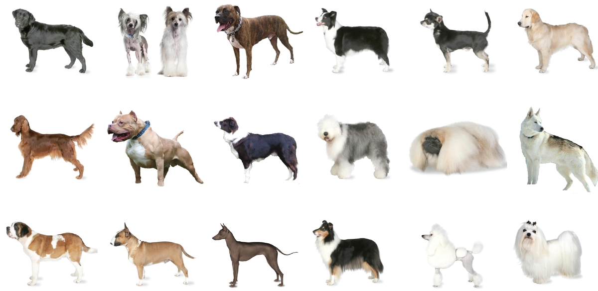 Revealed Britain S Most And Least Loved Dog Breeds Yougov
