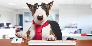 Americans are divided about the presence of dogs in the workplace
